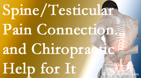 Cross Chiropractic Center shares recent research on the connection of testicular pain to the spine and how chiropractic care helps its relief.