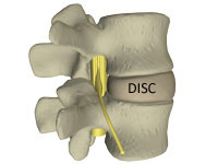 the disc in the lower back
